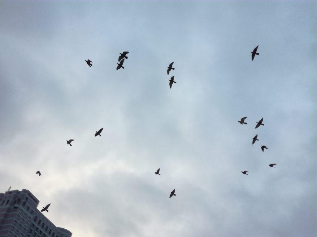 Bạn có bao giờ chụp mấy chú chim đang bay bằng di động không?